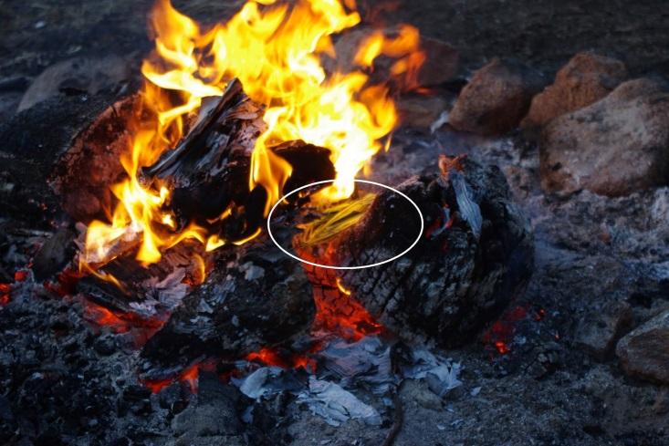 http://1.bp.blogspot.com/-4AoosVaCW7c/VDutDwl44DI/AAAAAAAAAZo/3XUIqegceIc/s1600/Echium%2Band%2Bfire.JPG