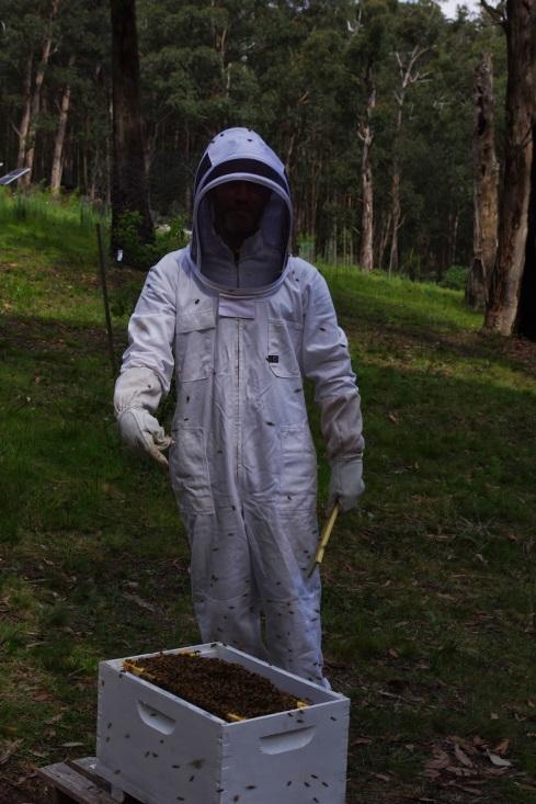 http://1.bp.blogspot.com/-g5jaLFz6y2k/VE4gXqVLtiI/AAAAAAAAAcE/VLvdHso2gdo/s1600/Bees%2Bin%2Bthe%2Bhive%2Bbox.JPG