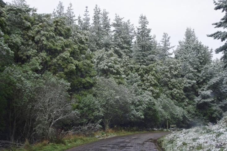 http://1.bp.blogspot.com/-lMs4jBPJl78/U99qFtc-S9I/AAAAAAAAAMU/TCZMzhsxT3A/s1600/Forest+in+snow.jpg