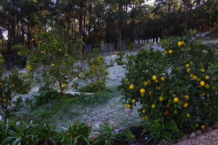 http://2.bp.blogspot.com/-GQRH_jf0xlc/U99qQmOHwhI/AAAAAAAAAMs/WO2KQCRode4/s1600/Frost.jpg