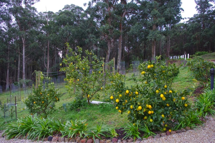 http://2.bp.blogspot.com/-Y3za6UxVZ4A/U-gquRIMMQI/AAAAAAAAAOM/lgVr9-bcVU0/s1600/Citrus+after+harvesting.jpg