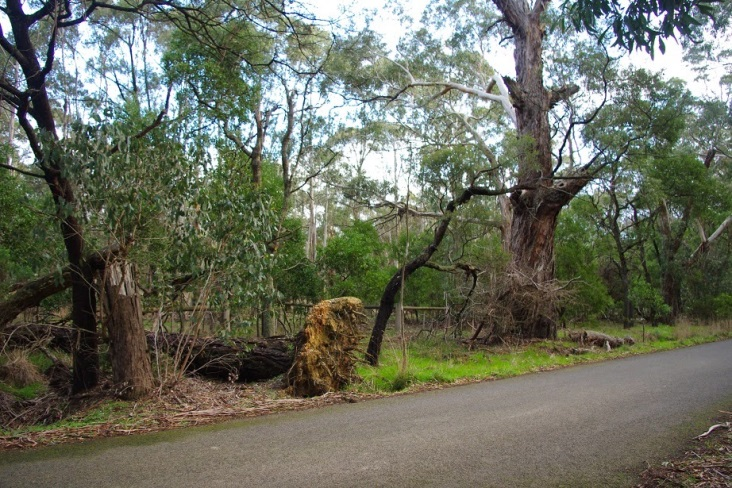 http://3.bp.blogspot.com/-1e6T8ZtyeZQ/U8JqKIX7M1I/AAAAAAAAAIY/ZIc16g2Nf1k/s1600/Tree+falling+over.jpg