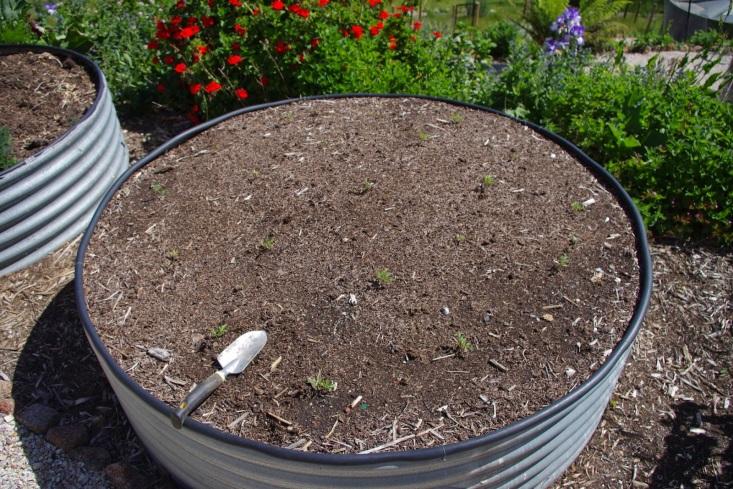 http://4.bp.blogspot.com/-K4sc9-G20Z0/VGCS0rLqlRI/AAAAAAAAAf8/-69RamOcjms/s1600/Tomatoes%2BCherokee%2BCherries.jpg